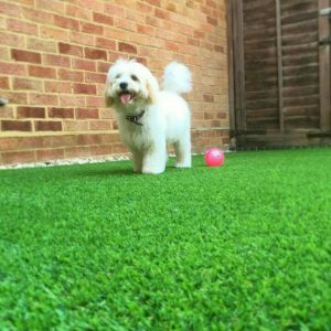 Milton Keynes Artificial Grass for Dogs